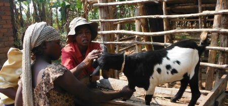 Smallholder Goat Farmers organise to form Cooperative Union.